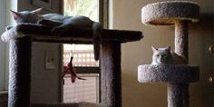 Summer is here and your cat will need a really cool place to hang out. A place that offers him everything he needs to get through those lazy summer days. Whether it be napping or playing, your cat must be entertained. This tree has everything your playful or sleepy kitty needs. It offers enough condo …