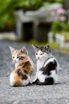 Kittens looking over their shoulder