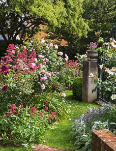 A magnificent New Plymouth cottage garden is filled with pastel pink and creamy roses