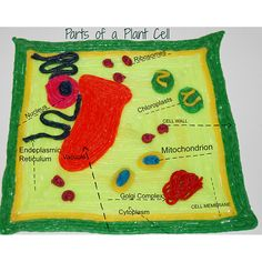 #STEAM ACTIVITY - 3-D Parts of a Plant Cell