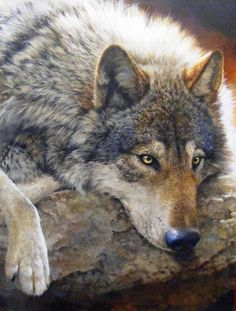 Painting of Gray wolf by Bonnie Marris. Looks so life-like, especially the eyes!