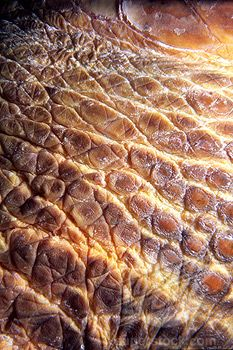 Reference for me to keep in mine of what scales look like nature.