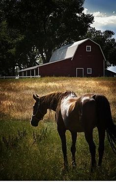 Barn in the country with. A beautiful horse.