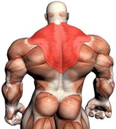 A csuklyásizom (trapézizom) edzése - Testépítek - testépítés, diéta, étrend, edzésterv