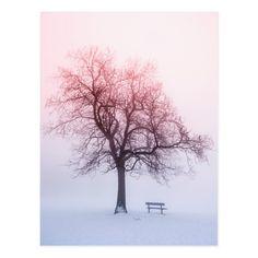Winter Trees, Winter Snow, Winter Schnee, Winter Magic, Winter Beauty, Winter Landscape, Belle Photo, Sunrise, Beautiful Pictures