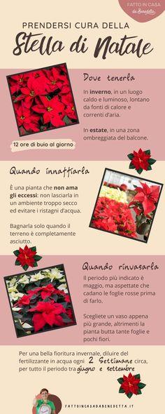 Kalanchoe Blossfeldiana, Flower Decorations, Planting Flowers, Xmas, Christmas, Flora, Green, Plants, March