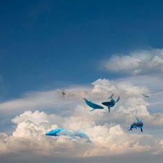 Edição de imagens  Fotos de baleias e céu- Internet Adobe Photoshop Cs6