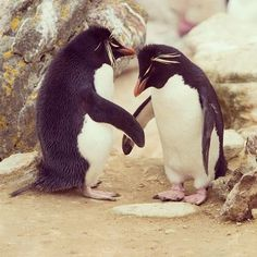 Secret penguin handshake caught in picture while they were not looking...lol