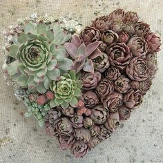 Valentine's Day. By Linda Estrin. | Succulents and Plants | Pinterest
