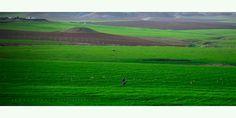 شمال العراق