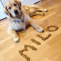What a cute idea and such a well trained dog to not bother the food in front of him! :)