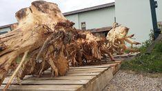 éger gyökér Natural Wood Furniture, Fa, Lion Sculpture, Nature, Crafts, Google, Naturaleza, Manualidades, Handmade Crafts