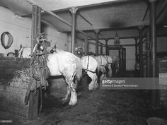 Stables at Paddington station, London, 1936. At this time the Great Western Railway was still using horses for various tasks including shunting