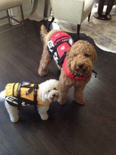 Oscar & Icarus - Danneel & Jensen's dogs