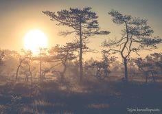 Ilahduta ystävää kauniilla suomalaisilla postikorteilla. Korttien kuvat ovat lukuisia palkintoja voittaneen valokuvaajan näkemys perinteisistä suomalaisista maisemista ja yksityiskohdista. Kortti on painettu Suomessa. http://www.salonsydan.fi/tuote/postikortti-teijon-kansallispuisto/