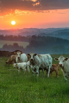 "sundxwn: ""Morning pasture by Mirek Czernek """