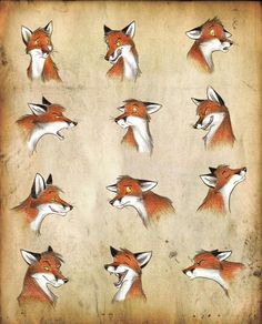 Foxes - again by Culpeo-Fox.deviantart.com on @deviantART