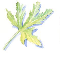 Print of Illustration of green geranium leaf