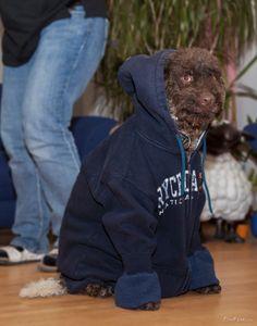 Hey, yo homie! I Cool, Hoodies, Sweatshirts, Parka, Trainers, Sweatshirt, Hoodie, Hooded Sweatshirts, Sweater