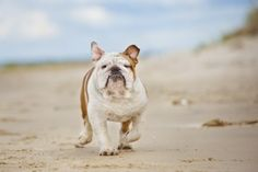 Beach Safety Tips for Our Lake Loving Canines
