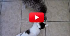 I Have Never Seen Such A Politely Greedy Cat! I Couldn't Stop Laughing!   The Animal Rescue Site Blog