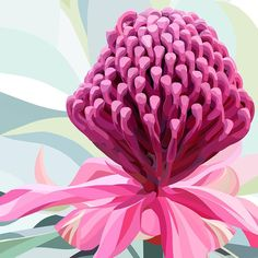 Australia artist Lamai Anne fine art prints for your home interior. Discover Australian artist Lamai Anne's beautiful Native Grace range. Modern and contemporary art for you home interior. Bring the Australian outdoors inside! Australian Wildflowers, Australian Native Flowers, Australian Artists, Plant Painting, Painting & Drawing, Sculpture Painting, Abstract Sculpture, Art Floral, Illustration Blume
