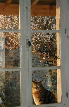 nice kitty . . and window too