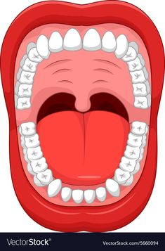 Parts of Human mouth. Open mouth and white healthy tooth , - Sante Dentaire