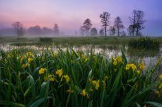 Kampinoski Park Narodowy - Strona 2 - Nikoniarze.pl - Forum fotograficzne