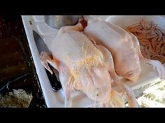Duck Processing - YouTube
