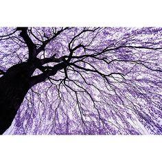【goxoxoxo】さんのInstagramをピンしています。 《「桜の滝(waterfall of cherry blossoms)」過去pic #栃カメ の @kinno_buta さんから #ピンクバトン をいただいたので投稿♪今年の桜の写真で一番のお気に入りです🌸 タグ付けを勝手にさせていただきますが、無理をなさらずにお願い致しますm(__)m #sonyimages #a6000 #alpha6000 #sonya #sonyalpha #sel1670z #栃木 #tochigi #宇都宮  #utsunomiya #桜 #さくら #サクラ #cherryblossom #cherryblossoms #花 #flower #広角 #wideangle #写真が好きな人と繋がりたい #ファインダー越しの私の世界 #東京カメラ部 #tokyocameraclub》