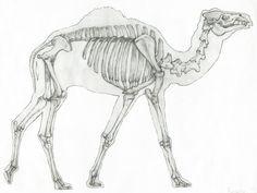 Camel Skeleton by Otvali
