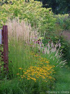 Rudbeckia fulgida var. fulgida with Pennisetum orientale 'Karley Rose' and Calamagrostis x acutiflora 'Karl Foerster' Aug 11 2008