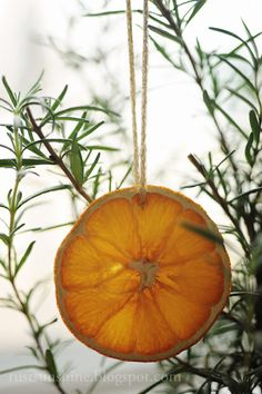 Dried orange slices - use as ornaments, on wreaths, in potpourri bags with cinnamon sticks and cloves. Noel Christmas, 12 Days Of Christmas, Diy Christmas Ornaments, Country Christmas, Winter Christmas, Christmas Decorations, Xmas, Orange Ornaments, Rosemary Christmas Tree
