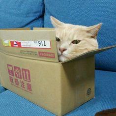 Boxing cat  (via vivien171999)