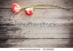 Rose on wooden background by Maya Kruchankova, via Shutterstock Wood Background, Powerful Quotes, Roots, Photo Editing, Royalty Free Stock Photos, Maya, Illustration, Wisdom, Editing Photos