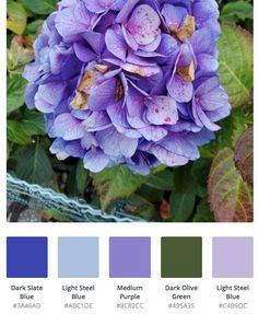 Gorgeous blue hydrangea color palette Hydrangea Colors, Hydrangea Flower, Purple Flowers, Book Creator, The Creator, Creative Thinking, Color Pallets, Summer Colors, Coloring Books