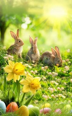 This group is for those who love all things Fall/Autumn as much as i do. We also observe other seasons that. Nature Animals, Animals And Pets, Baby Animals, Cute Animals, Beautiful Rabbit, Beautiful Horses, Animals Beautiful, Easter Art, Easter Crafts