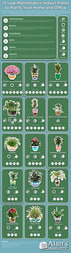 Best Indoor Plants - Infographic