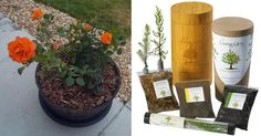 Celebrate New Life with a Biodegradable Urn  As cremations surpass burials in the U.S., this Denver-based product is gaining worldwide attention...