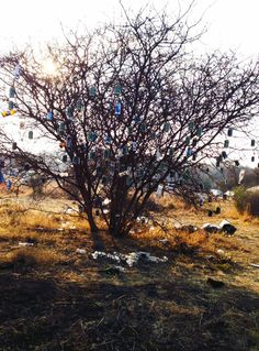 Oppikoppi 2014 <3 South Africa, Country Roads