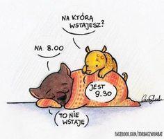 Motywacja pobudkowa Weekend Humor, Wombat, More Than Words, Good Mood, Funny Comics, Memes, True Stories, Winnie The Pooh, Wise Words