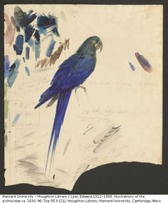 Edward Lear. Illustrations of the Psittacidae. ca. 1830.