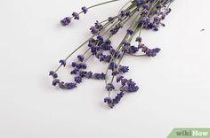 Image titled Make Lavender Oil Step 2