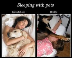 Funny pictures of the day -  Sleeping With Pets Expectation Vs Reality