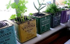 Twinings herb containers