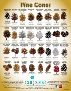 Pine Cone Art, Pine Cone Crafts, Trees And Shrubs, Trees To Plant, Conifer Trees, Garden Trees, Garden Plants, Tree Leaf Identification, Pine Cone Decorations