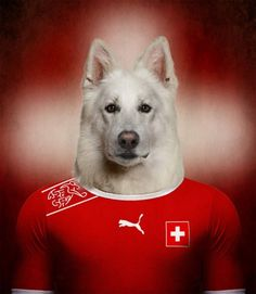 Funny Pictures Of Dogs Dressed In The Uniform Of Their National Football Team