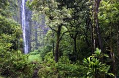 This is a lavish jungle with waterfalls and fresh water swimming holes. Go there and you will litera... - Shutterstock