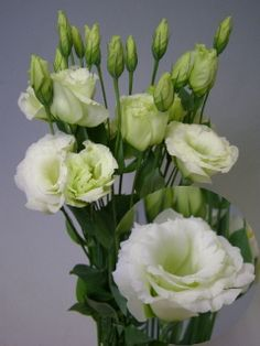 Eustoma (lissianthus) white with green buds to create some texture in the tables.